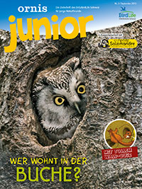 junior heft eisvogel