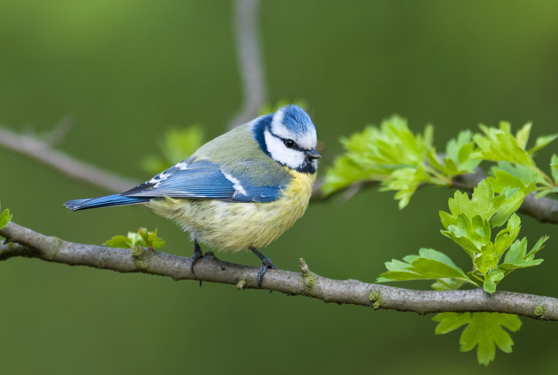 Recensement des oiseaux de nos jardins quels oiseaux habitent pr s de chez vous birdlife - Natagora oiseaux de nos jardins ...