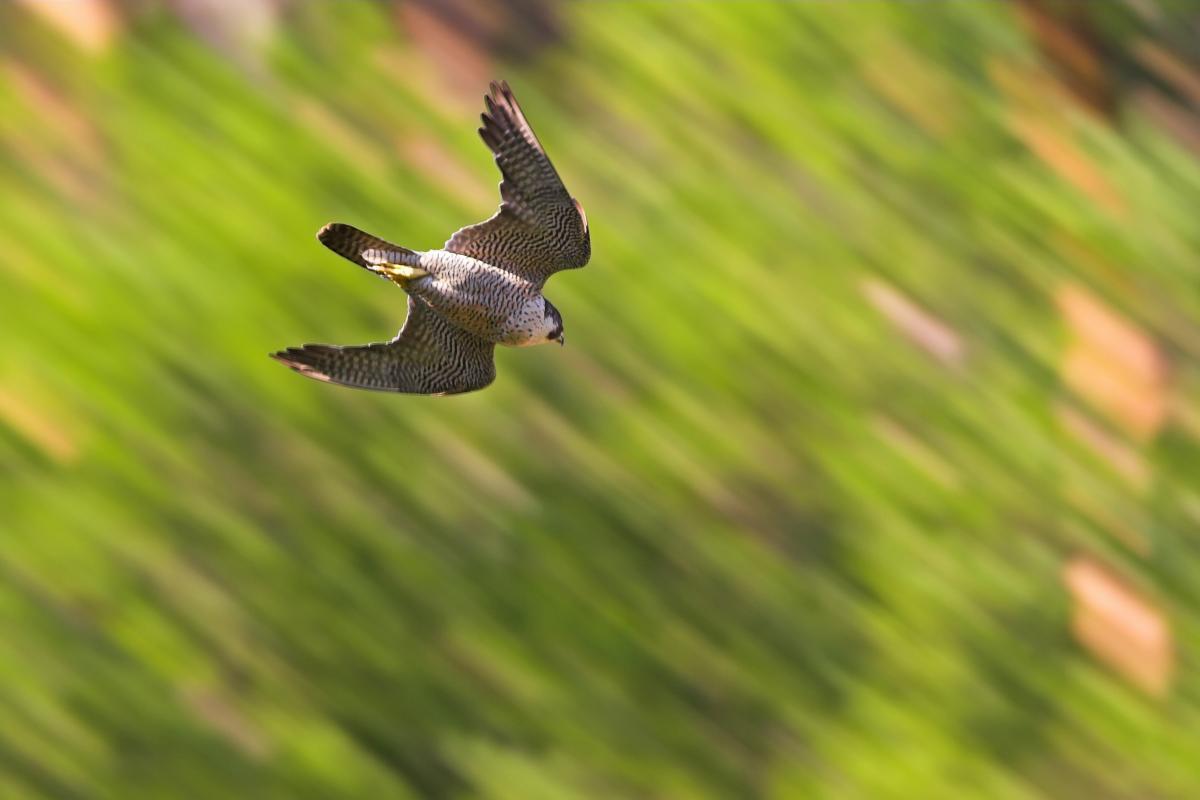 toten vogel gefunden vogelgrippe