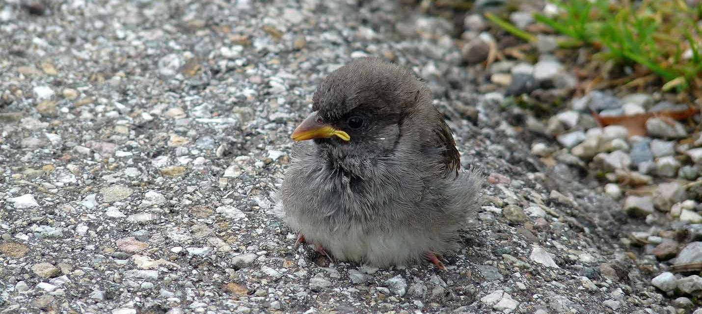 jungvogel gefunden